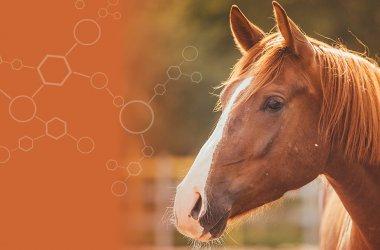 Horse Sense Solutions